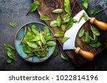 fresh mangold leaves  swiss... | Shutterstock . vector #1022814196