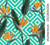 bird of paradise tropical... | Shutterstock .eps vector #1022836336