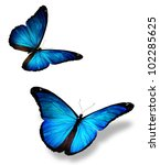 Stock photo two blue butterfly isolated on white 102285625