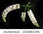 white flowers on black... | Shutterstock . vector #1022862196