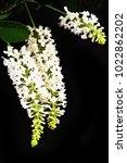 white flowers on black... | Shutterstock . vector #1022862202