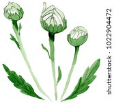 wildflower chamomile flower in...   Shutterstock . vector #1022904472