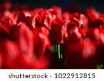 amazing nature concept of red... | Shutterstock . vector #1022912815