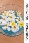 frangipani spa flowers over... | Shutterstock . vector #1022913202