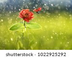 ladybug fly off from a red... | Shutterstock . vector #1022925292