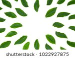 flat lay green leaf isolated on ...   Shutterstock . vector #1022927875