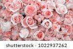 roses for background. pastel... | Shutterstock . vector #1022937262