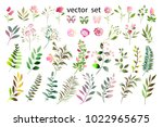 botanical collection. herbs ... | Shutterstock .eps vector #1022965675