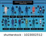human body internal organs... | Shutterstock .eps vector #1023002512