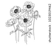 anemone drawn by a black line... | Shutterstock .eps vector #1023019462