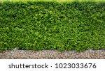 nature green leaf background...   Shutterstock . vector #1023033676