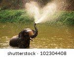 Thai Elephant  Daily Bath  In...