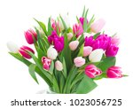 Bunch Of Pink And Violet Tulip...