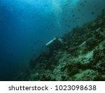 diver photographer in anilao... | Shutterstock . vector #1023098638
