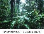tortuguero rainforest  costa... | Shutterstock . vector #1023114076