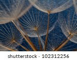 Dandilion Seeds Against A Blue...