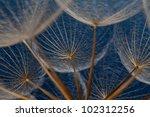 Dandilion Seeds Against A Blue...