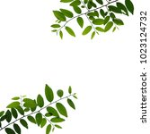 tree branch isolated | Shutterstock . vector #1023124732