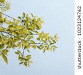 green tree branch | Shutterstock . vector #1023124762