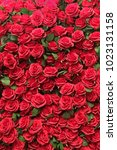 Stock photo hundred of red roses for background 1023131158