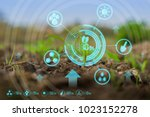 growing young maize seedling in ... | Shutterstock . vector #1023152278