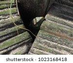 lizard in the nature   Shutterstock . vector #1023168418