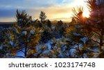Black Hills Morning