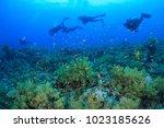 divers swim past beautiful... | Shutterstock . vector #1023185626