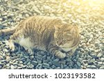 fat tabby cat sit on ground in... | Shutterstock . vector #1023193582
