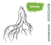 ginseng hand drawn sketch.... | Shutterstock .eps vector #1023221428