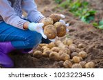 the hands of a girl holding a... | Shutterstock . vector #1023223456