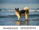 akita dog outdoor portrait... | Shutterstock . vector #1023292915