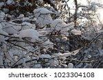 branches under snow   Shutterstock . vector #1023304108