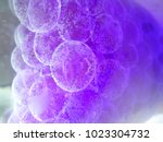 abstract round transparent cell ... | Shutterstock . vector #1023304732