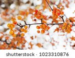 mini apple tree branch with... | Shutterstock . vector #1023310876
