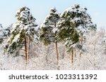 beautiful natural landscape... | Shutterstock . vector #1023311392
