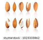 set of almonds in different... | Shutterstock . vector #1023333862