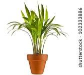 chrysalidocarpus lutescens palm ... | Shutterstock . vector #102333886