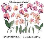 isolated orchid phalaenopsis ...