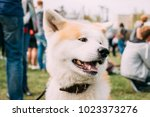 close view of akita dog or...   Shutterstock . vector #1023373276
