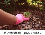 gardener removing weeds from... | Shutterstock . vector #1023375652