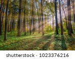 autumn forest with sunbeams | Shutterstock . vector #1023376216
