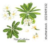 beautiful hand drawn botanical... | Shutterstock .eps vector #1023409132