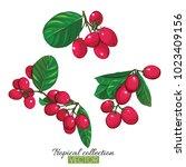 beautiful hand drawn botanical... | Shutterstock .eps vector #1023409156