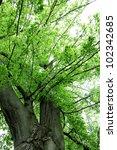 forest | Shutterstock . vector #102342685
