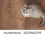 one fluffy cat playing on... | Shutterstock . vector #1023462295