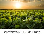 green ripening soybean field ... | Shutterstock . vector #1023481096