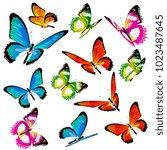 beautiful color butterflies set ...   Shutterstock . vector #1023487645