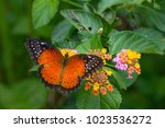 a colorful butterfly | Shutterstock . vector #1023536272