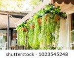 Hanging Plant In Pot Decoratio...